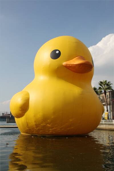 floatingduck_27.jpg